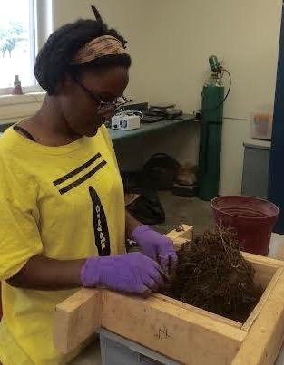 Ivori sieving switchgrass soil in the lab.