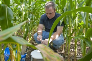 Field technician AJ Ozanich collects greenhouse gas samples in a corn field, part of the KBS LTER biofuels research program; Photo Credit: K.Stepnitz, Michigan State University