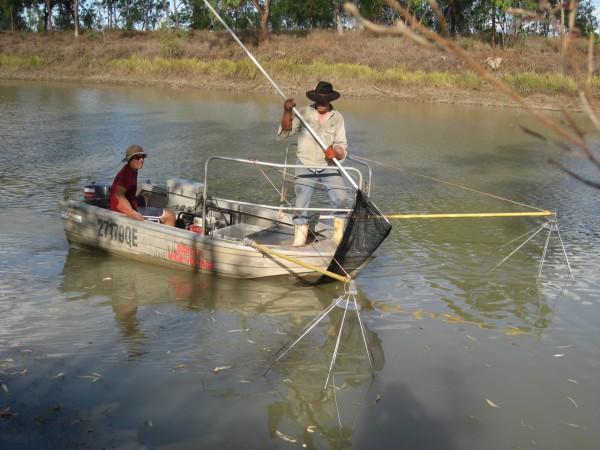 HamiltonAustrailiaElectrofishing