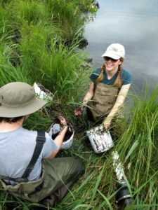 Undergraduate researchers collecting flocculent material (floc) in Augusta Creek to test for carbon content.