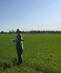 Kristi Gdanetz collecting vegetative stage wheat plants for microbiome analysis.