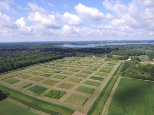 GLBRC Biofuels Cropping System Experiment in late summer